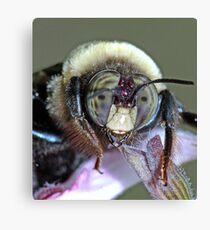 Bee Still ! Canvas Print