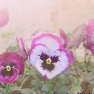 Pansies by Julie Sherlock