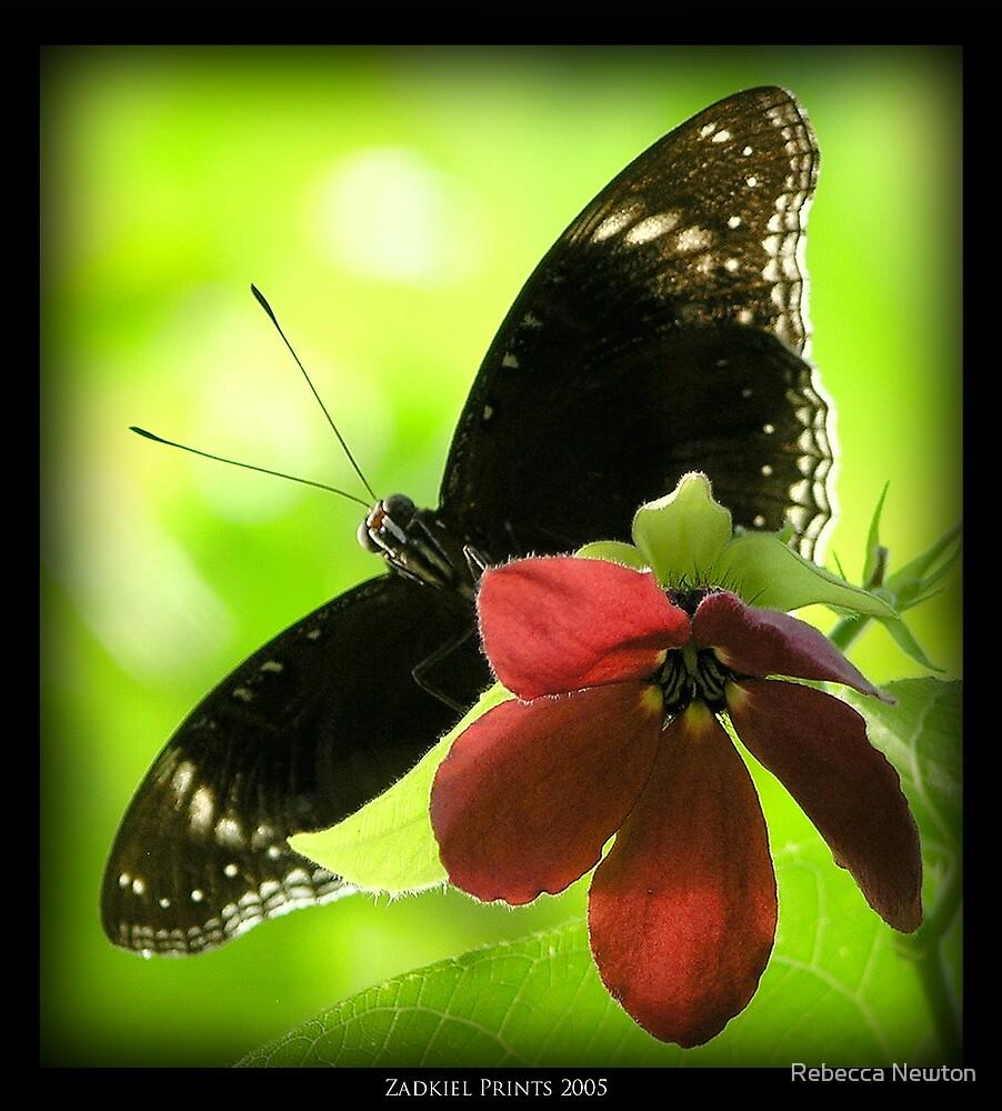 Butterfly by Rebecca Newton
