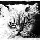 Cat stipple by Correlation