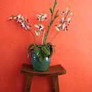 Asian flowers by kgtoh