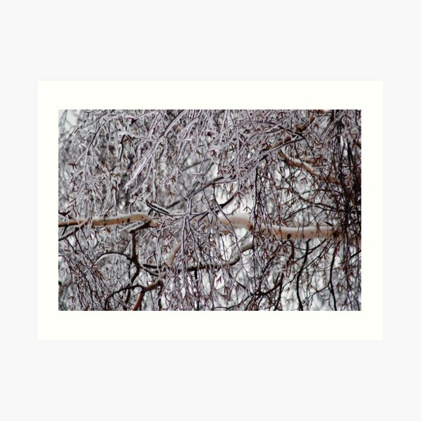 Winter-Frost-Tree Art Print