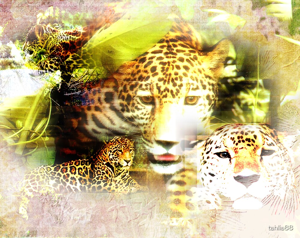 . : Jaguar Paw : . by tahlia88
