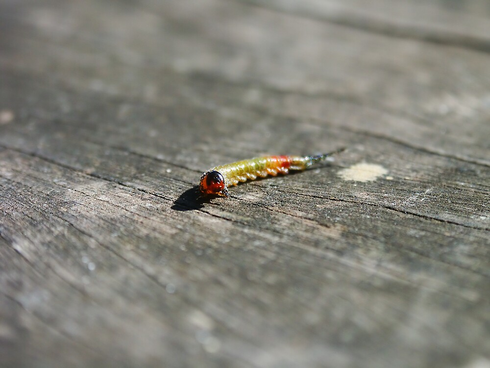 Caterpilla by Edward Hor