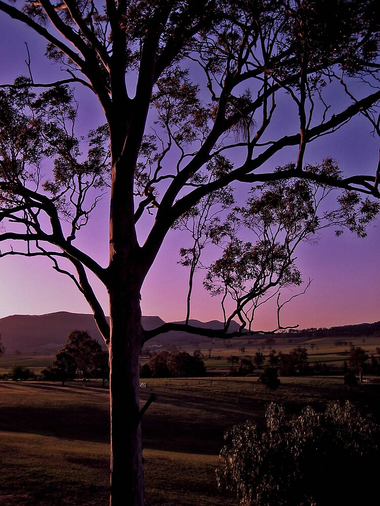 Hunter Valley Sunset 2 by Grey