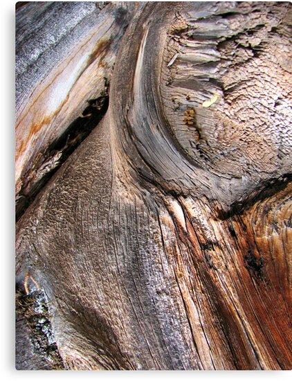 Liquid Bark Tapestry by Kathie Nichols