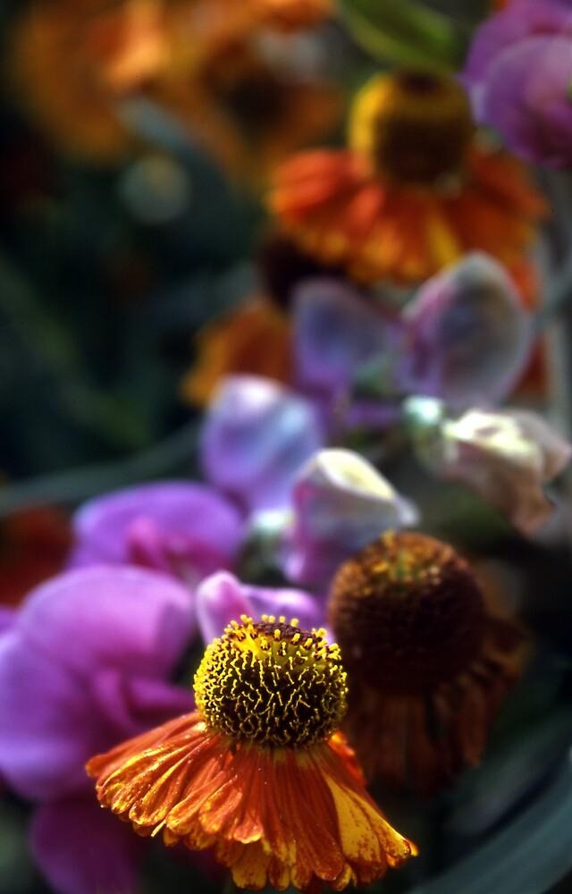 Flowers (1) Knaresborough by Stephen Jackson