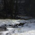 snowy Oregon forest, fox creek 9 by Dawna Morton