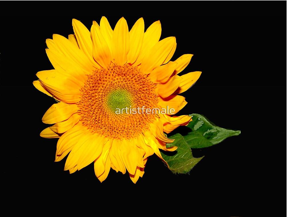 Flower Power by artistfemale