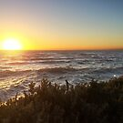 Indented Heads - Andersons Reserve by trossi