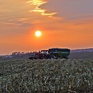 Harvest Time by Susy Rushing