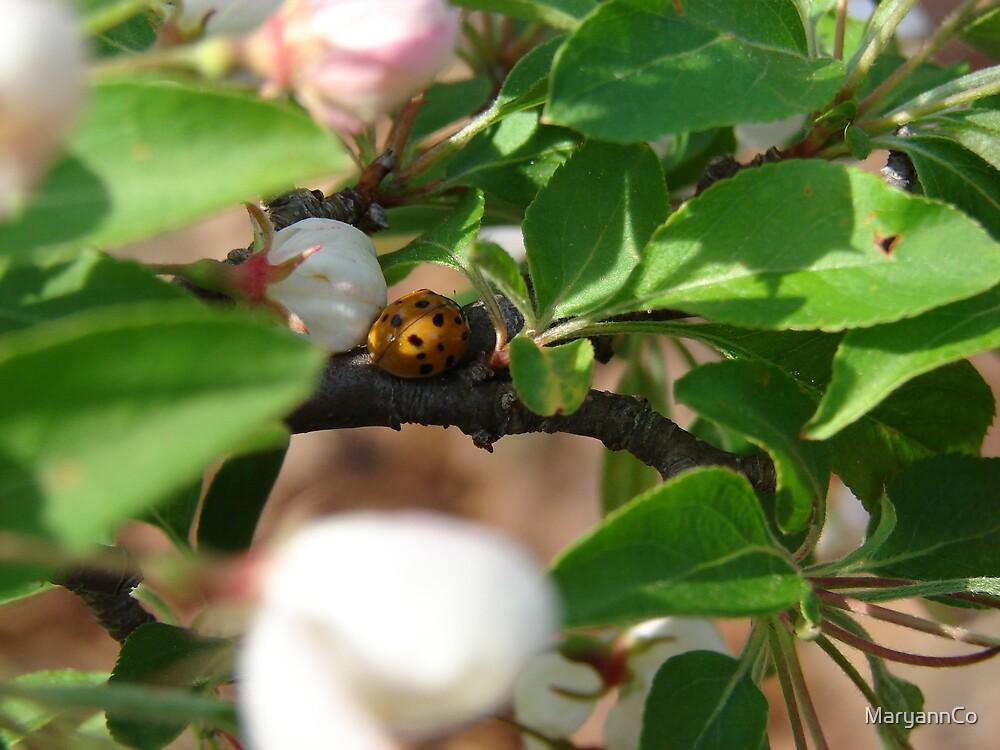 Lady bug ~ hide and seek by MaryannCo