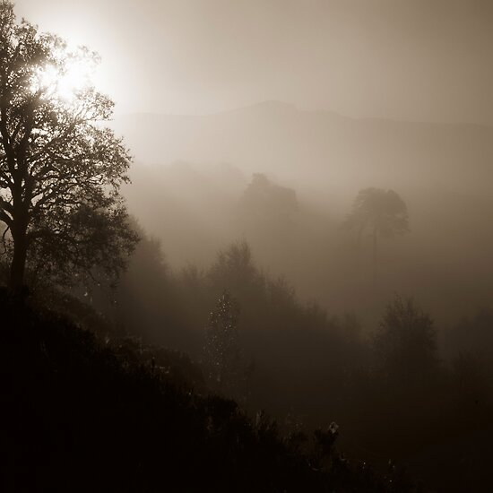 Sepia Mist by Tim Haynes