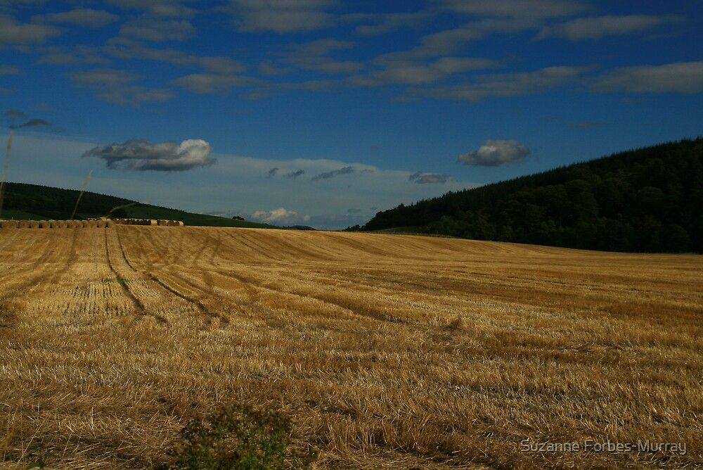 Taking in The Bales by Suzanne Forbes-Murray