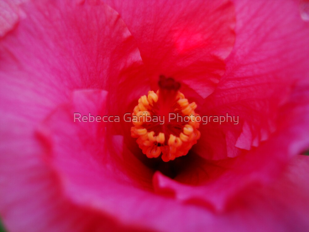 hibiscus #2 by Rebecca Garibay Photography
