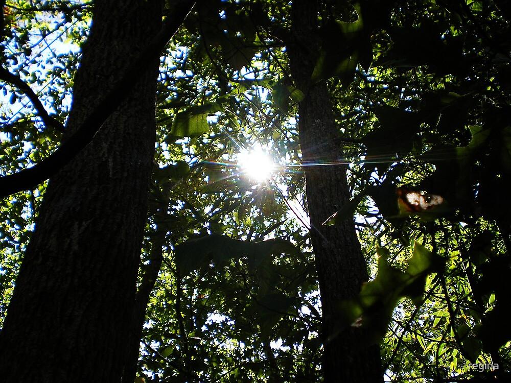 thru the trees by regina