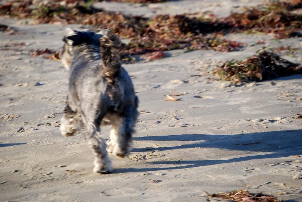 Run spot run by Princessbren2006