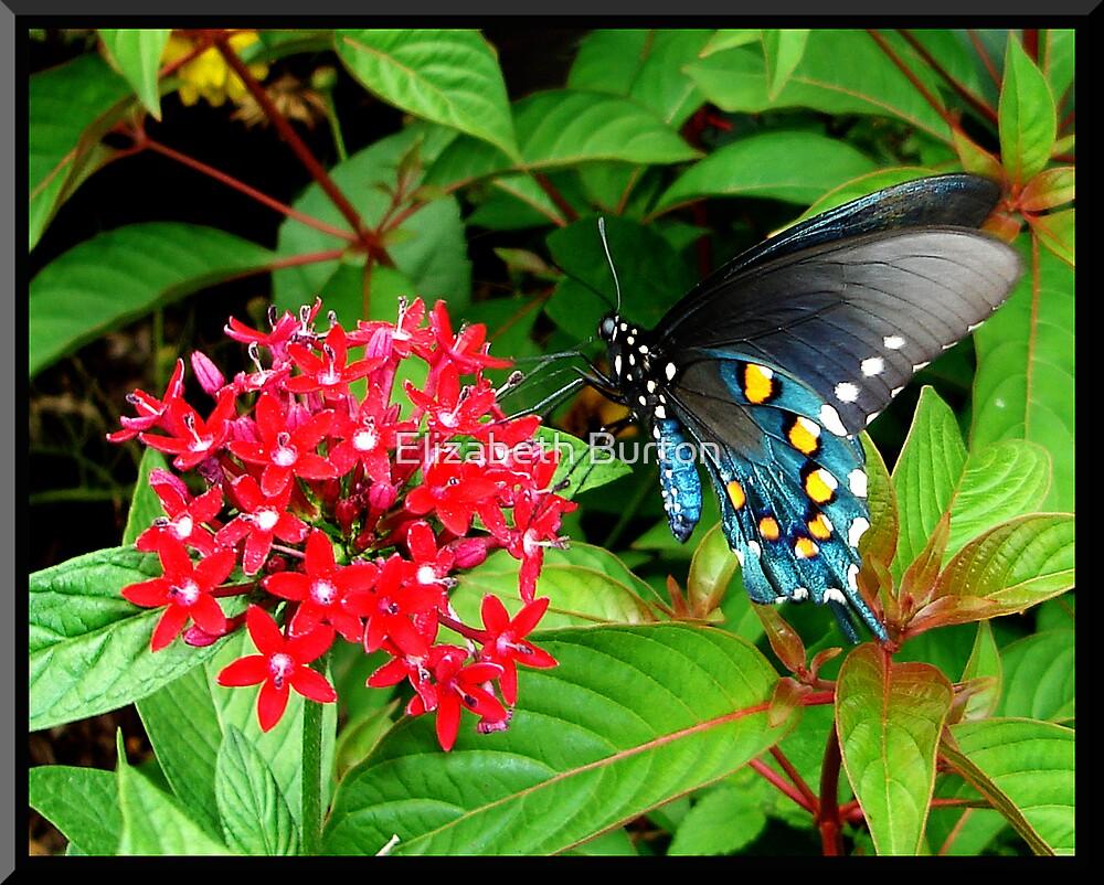 Butterfly by Elizabeth Burton