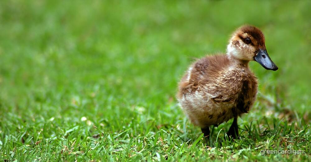 Shy Duckling by greencardigan