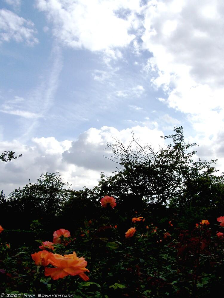 English roses by NinaB