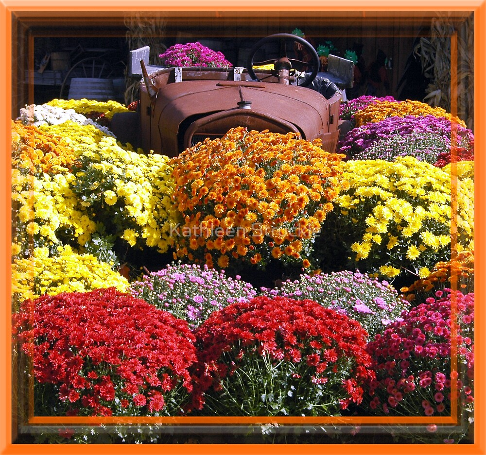Antique Car And Mums by Kathleen Struckle