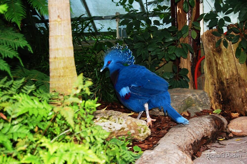 Blue Bird by Richard Peden