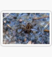 Wolf Spider Sticker
