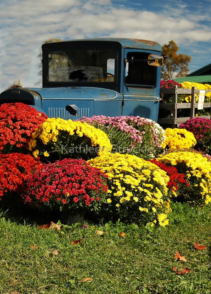 Blue Truck And Mums by Kathleen Struckle