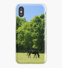Pony Paddocks iPhone Case/Skin