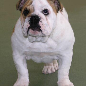 Bulldog by RebeccaNewton