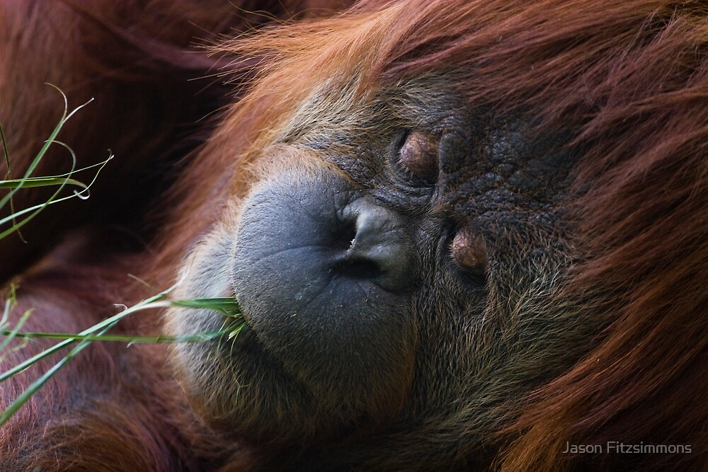 Sleeping Beauty by Jason Fitzsimmons