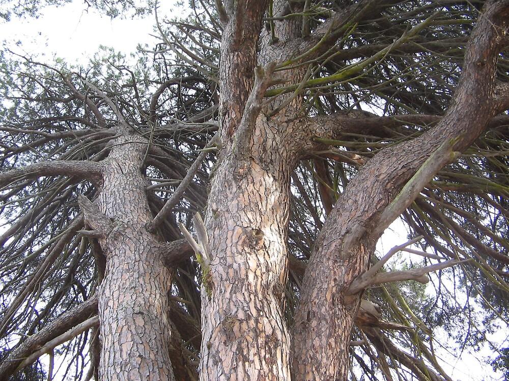 Tree by Dorian