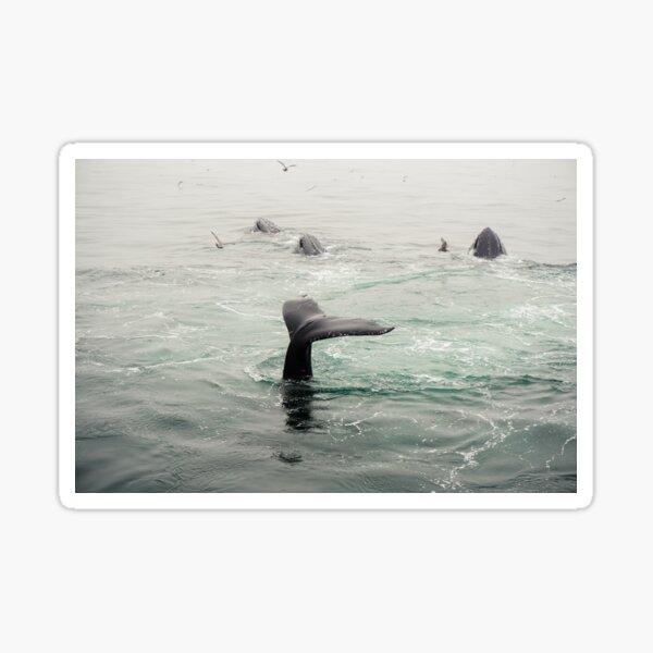 Whale Tail Sticker