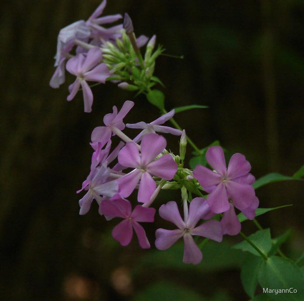 Wildflowers ~ by MaryannCo