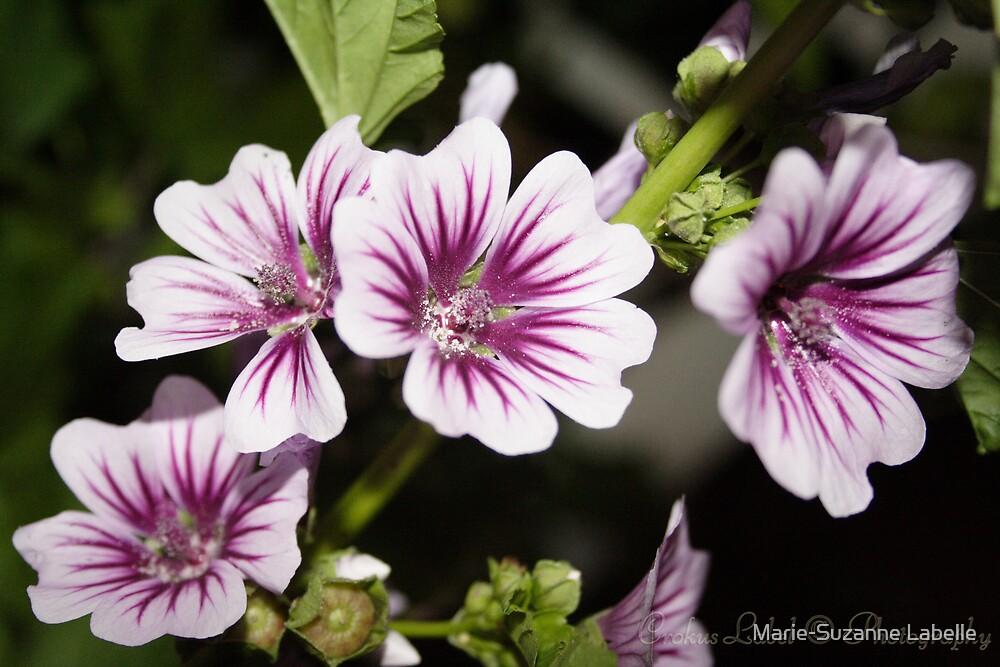 Purple Pollen by Marie-Suzanne Labelle