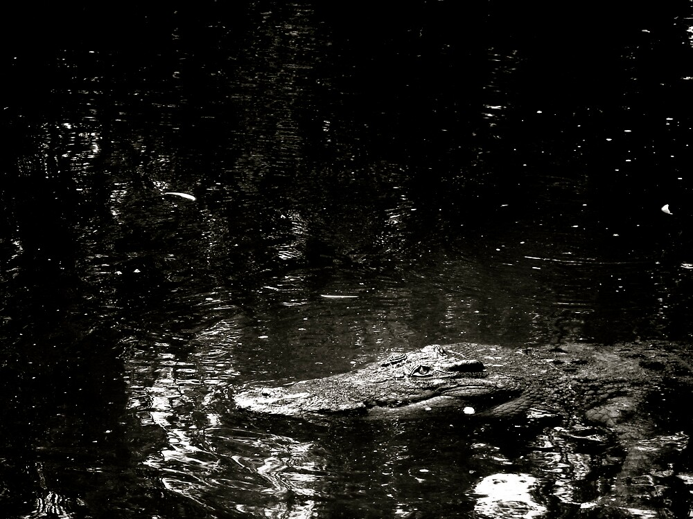 Stumpy by diongillard