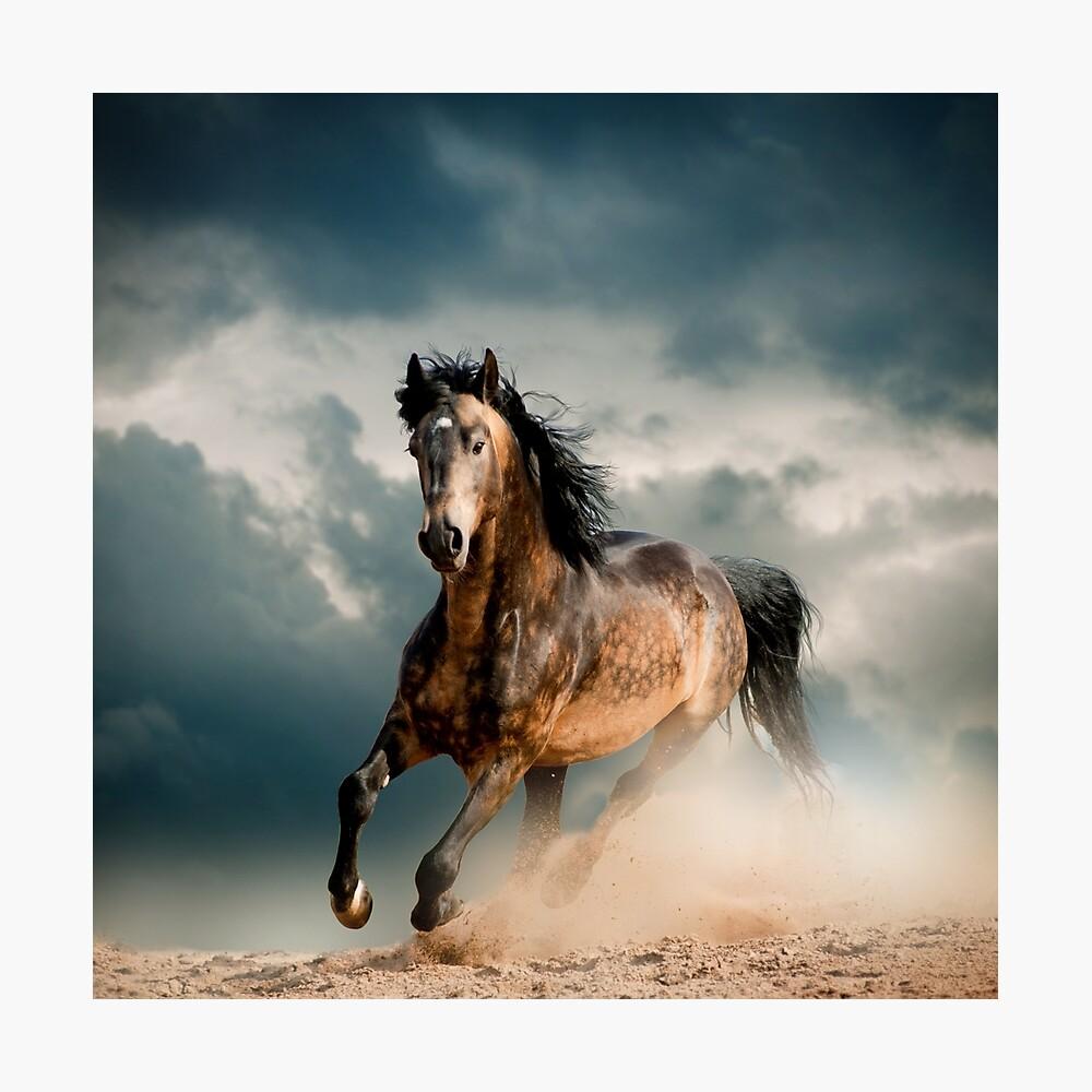 Galoppierendes Pferd Fotodruck