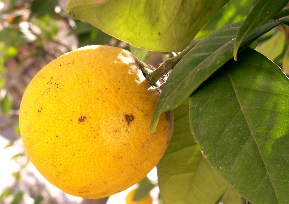 Spanish Lemon by lily1