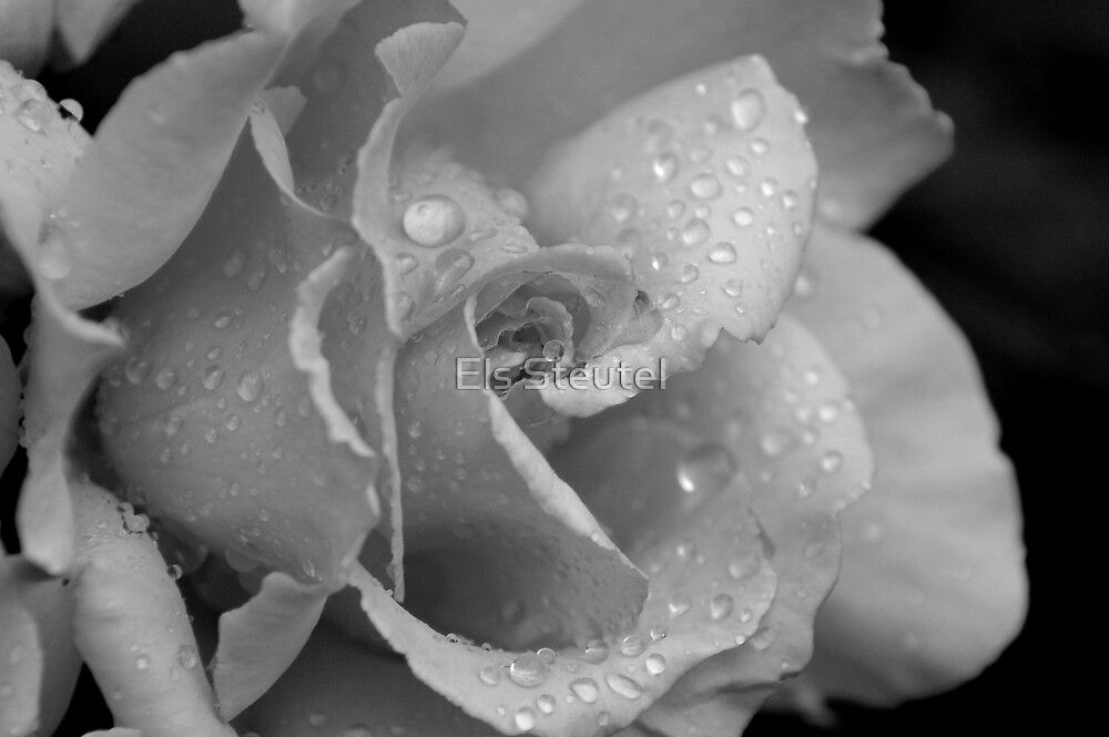 rose in B&W by Els Steutel