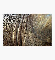 Wrinkles Photographic Print