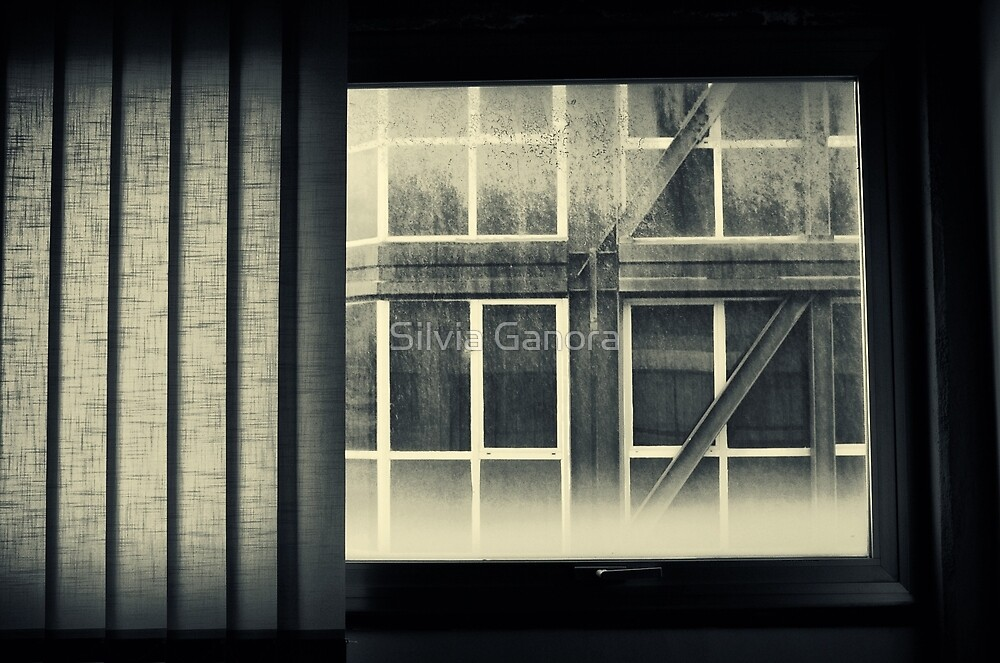 Through the window by Silvia Ganora