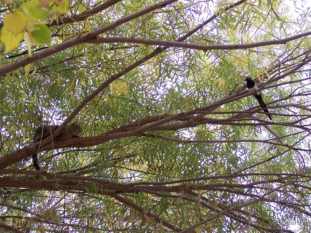 Bird of Prey by shutterup
