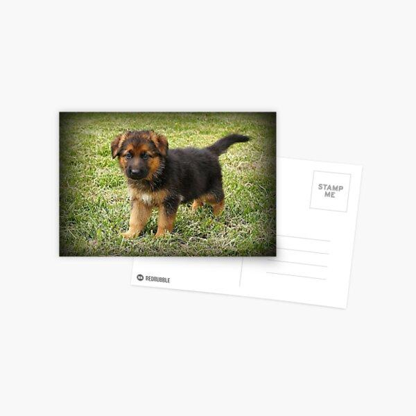 Black & Tan Puppy Postcard