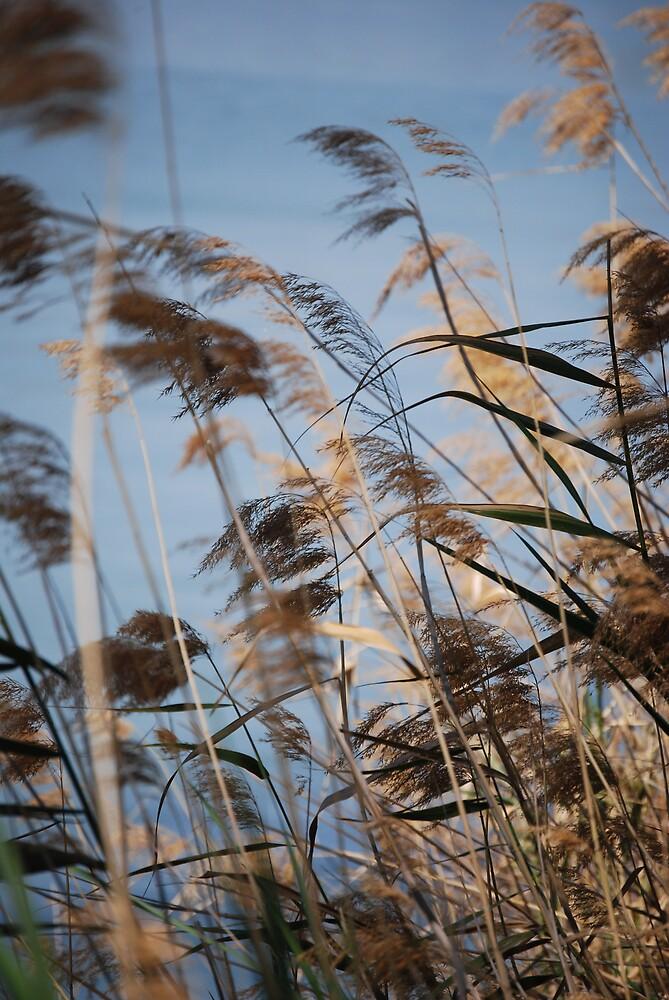 reeds 2 by Princessbren2006