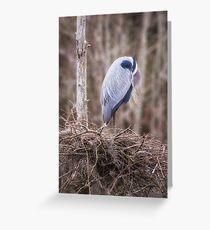 Resting Heron Greeting Card