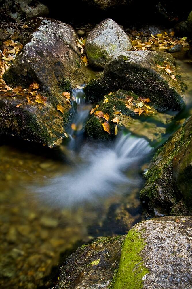 Autumn Flow by Patrick Beggan