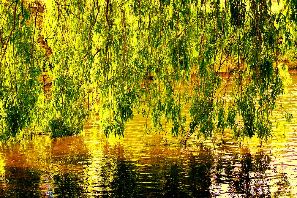 Willow Wall by JoTaylor