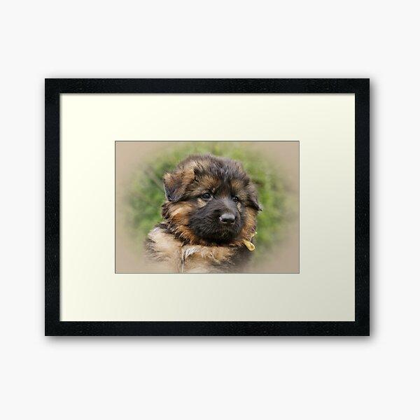 Kaiser -- 6 weeks Framed Art Print