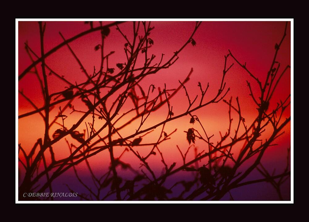 SUNRISE THROUGH THE TREES by DebR