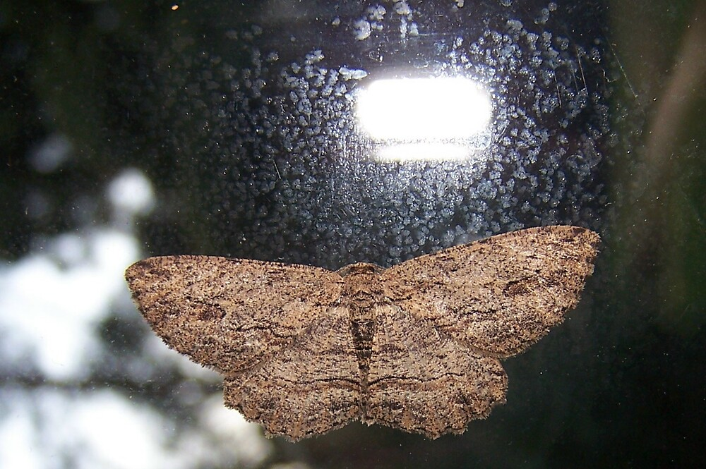 moth by Damian7